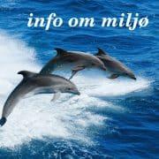 info om miljø